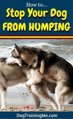 Husky humps a biker nasty snack-52