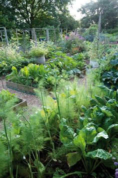 Montana vegitable garden. Virginia Woolf's Garden, photos by Caroline Arber. Gardenista.