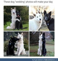 we collect the best dogs memes 😉 enjoy with cute dog memes:) if you enjoy please share. Cute Animal Memes, Animal Jokes, Cute Animal Pictures, Cute Funny Animals, Baby Pictures, Cute Puppies, Cute Dogs, Funny Dogs, Cute Stories