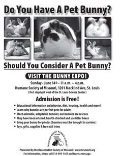 Bunny Expo! - Syndical - http://syndical.com/blog/bunny-expo-syndical/