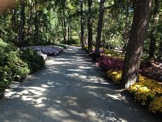 Amazing Floral Bordered Path Garvan Woodland Gardens Pictures Gallery