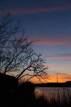 空のグラデーションが美しい日は 木立ちのシルエットを写したくなる。  特に冬は 影絵のような趣に...