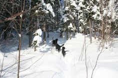 Walk in the forest during winter time.