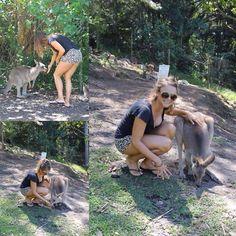 Kangaroos at Currumbin Wildlife Sanctuary   #kangaroo #socute #wildlife #lovealltheanimals #currumbinwildlifesanctuary #imagineeducation #currumbin #goldcoast #australia by cassidy_ce http://ift.tt/1X9mXhV