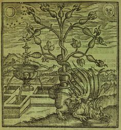 lostpastremembered: A Celebration of FRAGRANT and Frankincense Shortbread