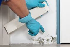 Getting a regular mold inspection in St Petersburg is important! Read up on these interesting mold facts.