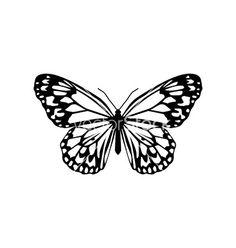 Butterfly vector image on VectorStock Tattoo Drawings, I Tattoo, Butterfly Drawing, Butterfly Project, Piercings, Future Tattoos, Tattoo Inspiration, Small Tattoos, Henna