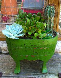 Green Wooden Planter  Cactus/Succulents!