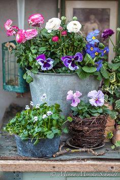 Idag blir det en pensée-kavalkad. 10 olika planteringar som ni kan hämta inspiration ifrån. I dessa hagelstormarnas tid behövs det vårb...