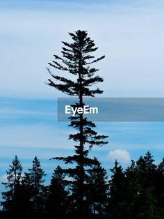 Discover the photography 124107827 by Sabine Seiter_ey – Explore millions of royalty-free pictures from outstanding photographers with EyeEm Low Angle, Tree Silhouette, Royalty Free Pictures, Wind Turbine, Sky, Tattoo, Explore, Photos, Photography