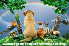 At Just Over The Rainbow Bridge, you can easily interact with your pet, you can personalize poems and you can send sympathy cards to your pet. Animals And Pets, Cute Animals, Pet Loss Grief, Amor Animal, Animal Poems, Rainbow Bridge, Over The Rainbow, Pet Memorials, Fur Babies