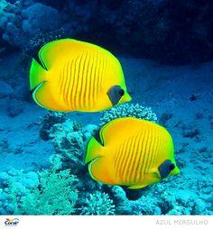 Cores inspiradoras do fundo do mar.