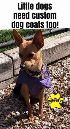Small dogs need coats to help keep them active too. Waterproof Dog Coats, Waterproof Fabric, Small Dog Coats, Small Dogs, Puppy Find, Dog Winter Coat, Little Dogs, French Bulldog, Life Is Good