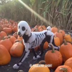 Funny Animal Videos, Cute Funny Animals, Animal Jokes, Cute Little Animals, Funny Animal Memes, Funny Cute, Funny Dogs, Top Funny, Cool Halloween Costumes