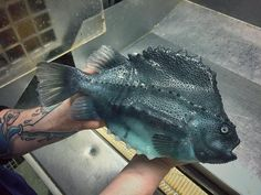 Breakfast? No, thanks - Crazy-looking fish from the deep sea - Pictures - CBS News