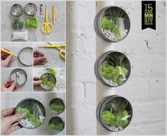 Are you usually attracted towards miniatures when it comes to home decor? If yes then you would love to try making a mini terrarium that occupies so less Mini Terrarium, Light Bulb Terrarium, Terrarium Bowls, Build A Terrarium, Terrarium Containers, Air Plant Terrarium, Air Plants, Indoor Plants, Small Water Gardens