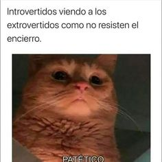 The Best here: 39 Funny Memes And Pics That'll Obliterate Your Boredom Best Memes, Dankest Memes, Funny Memes, Funny V, Funny Cats, Rare Cat Breeds, Cute Cat Memes, Funny Spanish Memes, Funny Short Videos