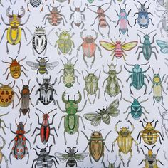 "Johanna Basford | Picture by Laurence Roucou Chateau | Colouring Gallery - ""Secret Garden"" - Bugs & Insects"