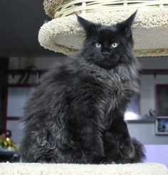 I miss my cat that looked like this one!!  So sad she died!!