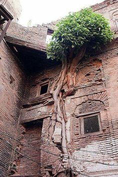 An Abandoned Building. Nature Taking Over. Abandoned Mansions, Abandoned Buildings, Abandoned Places, Beautiful World, Beautiful Places, Weird Trees, Dame Nature, Unique Trees, Growing Tree