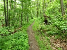 Image result for new england trail photography