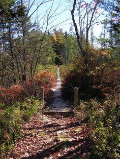In the Halifax area and looking for a nice spot for a walk or hike? Check out Charles L. The trails are lovely with lake views. And you might even spot a beaver building a dam. Sport Park, Lake View, Nova Scotia, Regional, Beaches, Parks, Trail, Places To Visit, Hiking