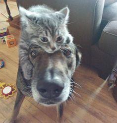 25 photos qui prouvent que l'amitié entre chiens et chats existe - Animalaxy