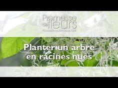 Promesse de Fleurs - YouTube Comment Planter, Planters, Roots, Plant, Window Boxes, Pot Holders, Flower Planters, Pots