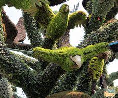 A Exposição Internacional de Mosaicultura acontece em Montreal e reúne os apaixonados por obras de arte criadas com plantas. Um verdadeiro show!
