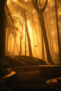 Elf Forest, Sintra, Lisbon, Portugal