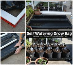 How to grow in grow bags made of breathable fabric. It is the aeration that makes grow bags superior to other container gardening. Hydroponic Gardening, Hydroponics, Container Gardening, Organic Gardening, Indoor Gardening, Gardening Tips, Garden Bags, Garden Ideas, Self Watering Containers
