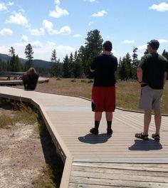 Yellowstone Family Vacation | West Yellowstone | TodaysCreativeBlog.net
