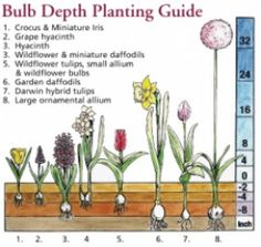 How to Grow Flower Bulbs