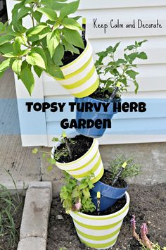 Topsy turvy herb garden. Perfect for my apartment!