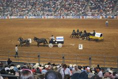 Chuck Wagon Races at the Houston Rodeo
