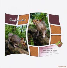 Envie de scrap: Les écureuils de Central Park ne sont pas farouche !