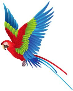 Colourful Parrot PNG Clipart
