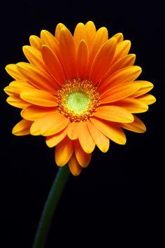 Gorgeous orange