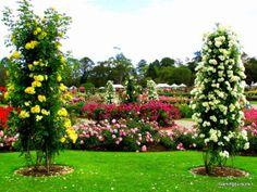 State Rose Garden of Victoria