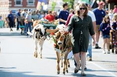 The annual Strolling of the Heifers festival in Brattleboro, VT | Livability