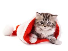 Funny Christmas Cats Pictures-AmO Images-AmO Images