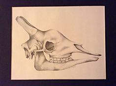 $150 - Original giraffe skull graphite drawing in custom black frame with matte
