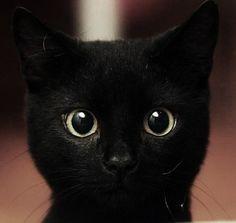 LOVE black cats..