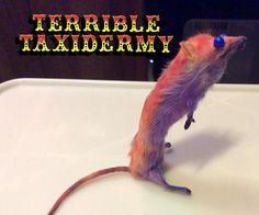 Orange Stripe! Terrible Taxidermy