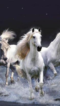 ☀White horses, horses, beach
