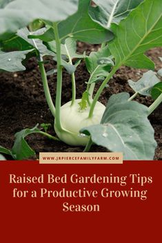 Have the best yields ever by planting in raised beds Plants For Raised Beds, Raised Garden Beds, Container Gardening, Gardening Tips, Vegetable Gardening, Building Raised Beds, Diy Herb Garden, Garden Ideas, Farm Projects