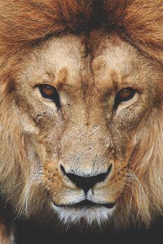 "vurtual: ""The Great Lion (by Julia Olsen) ""                                                                                                                                                                                 More"