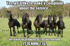 LOL!! This what my horse is like waiting for breakfast!!..