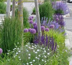 SUSTAINABLE ROMANCE Love this idea of planting in between the sidewalk and street Allium giganteum Allium Globemaster steppe sage Salvia memorosa Caradonna catmint Nepeta x faassenii Walkers Low and peat reed grass Calamagrostis x acutiflora Karl Foerster Herb Garden Design, Modern Garden Design, Small Cottage Garden Ideas, Cottage Gardens, Plans Architecture, Diy Garden Projects, Annual Plants, Front Yard Landscaping, Landscaping Ideas