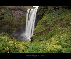 Skógarfoss - Iceland.  Copyright © Noelia Magnusson
